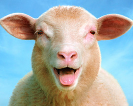 For Sale – Nashville Sheep Farm